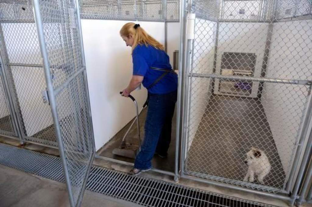 Dog Kennel and Vet Clinic Wastewater Treatment… | Onsite