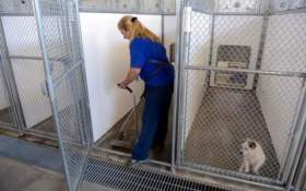 Dog Kennel and Vet Clinic Wastewater Treatment Recommendations